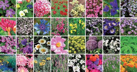 arbusti fioriti perenni piante perenni 32 variet 224 per bordura giardino balcone