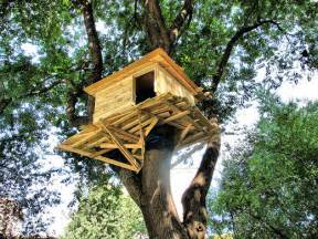 Pictures Of A Treehouse - let s build a treehouse goddammit undeaddad