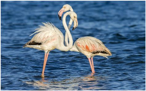 flamingo wallpaper love it or list it birds wallpaper archives page 4 of 25 decocurbs com
