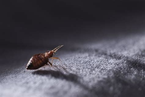 can you get sick from bed bug bites can you get sick from bed bug bites articles on health