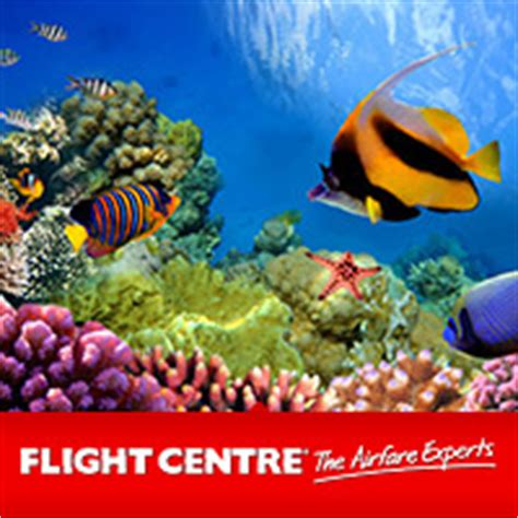 great barrier reef holiday packages deals flight centre