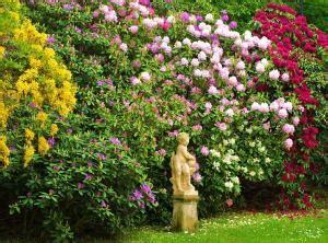 Rhododendron Sonniger Standort by R 243 żaneczniki I Azalie Choroby I Szkodniki