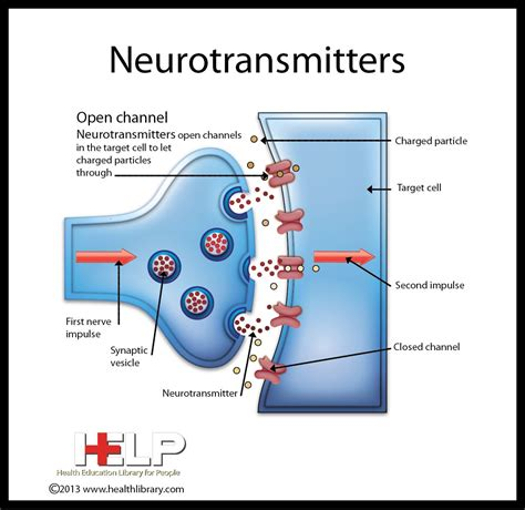 Neurotransmitters Also Search For Neurotransmitters Nursing Misc