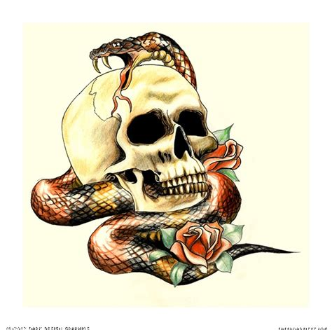 snake and skull tattoo designs skull and snake design artists org