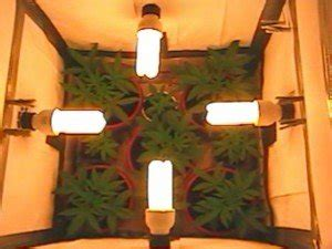 best light for veg stage best lighting for indoor cannabis growing