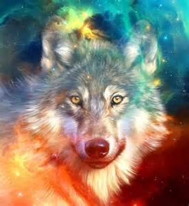 17 best images about wolves on wolves wolf