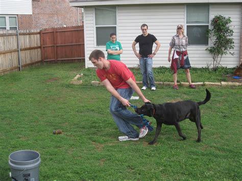 backyard agility course design house floor plans