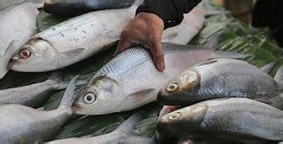 Pakan Ikan Lele Buat Mancing pilihan umpan mancing ikan bandeng tambak