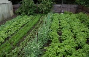 Vegetable Garden Tips Vegetable Garden Ideas In Your Yard Margarite Gardens