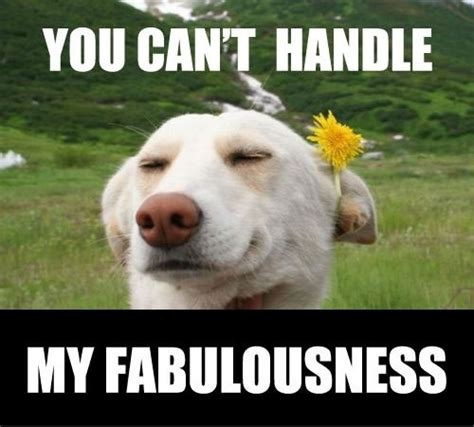 Im Fab Meme - 17 best images about im fabulous memes 3 on pinterest