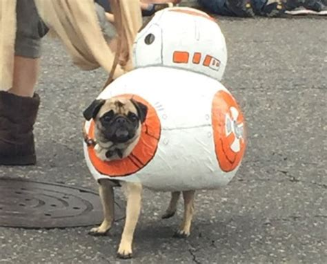 wars pug costume wars pug parade happened and the costume highlights are spectacular metro news