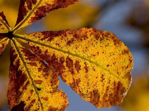 fiori da giardino autunnali piante autunnali perenni piante autunno