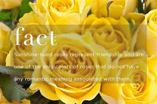what color represents friendship your meanings give the right fresh by ftd