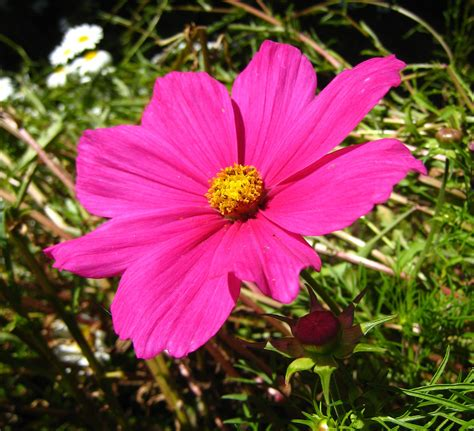 Vs Pink Flower pink flower images usseek