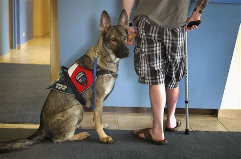 service dogs california what is a service or assistance