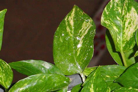 sick plants horticall interior plant service
