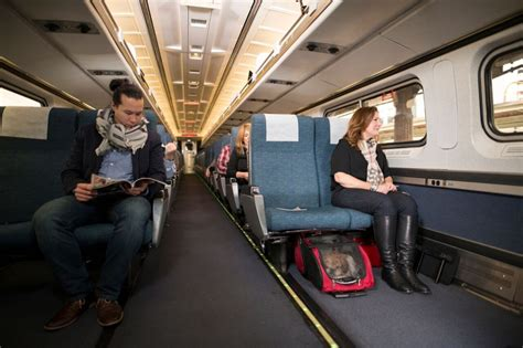 dogs amtrak amtrak pets on trains program expands the buzz business news