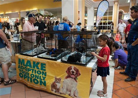 puppies for sale kitsap county kitsap humane society 2 sc