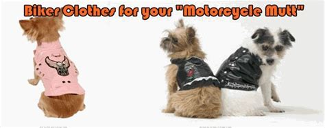 Motorcycle Apparel For Dogs by 61 Best Small Creatures Images On Pinterest Adorable