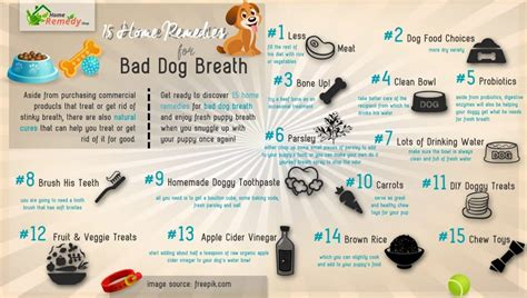 puppy bad breath home remedy 15 home remedies for bad breath home remedies