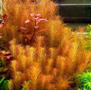 Nano Aquarium Pflanzen by Nano Aquarium Pflanzen Arten Pflege Anleitung