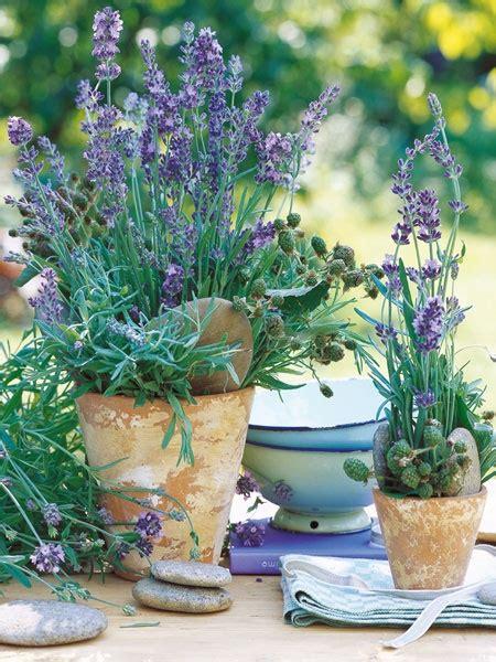 fiori primaverili da balcone 10 piante da balcone primaverili lavanda