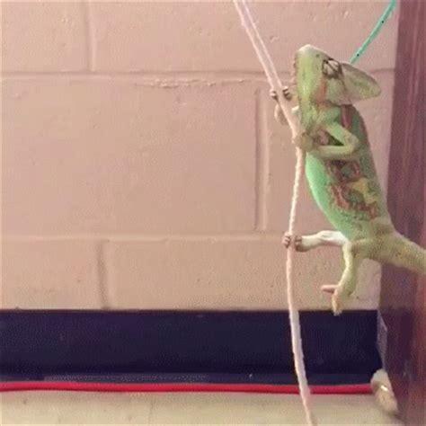 swing animated gif swing animated gif