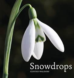 White Cottage Gardens - andy mcindoe s designer s diary snowdrops the new must