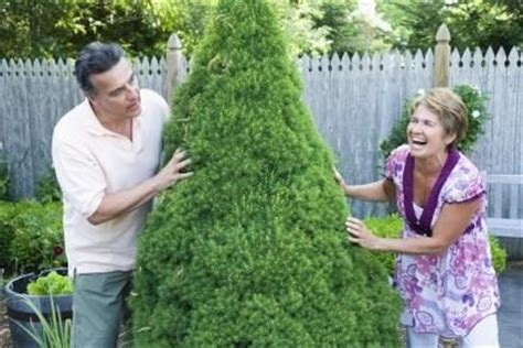 how to trim a topiary 17 best ideas about thuja hecke schneiden on