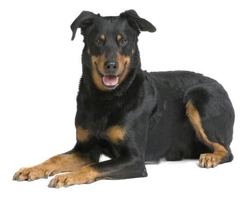 Le Hund