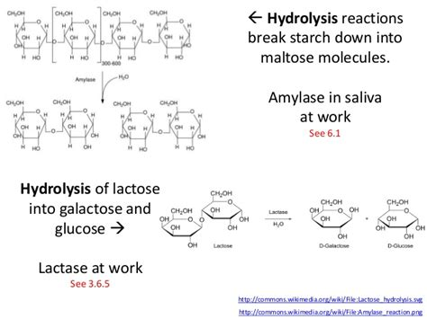 carbohydrates hydrolysis ib biology 3 2 carbohydrates lipids and proteins