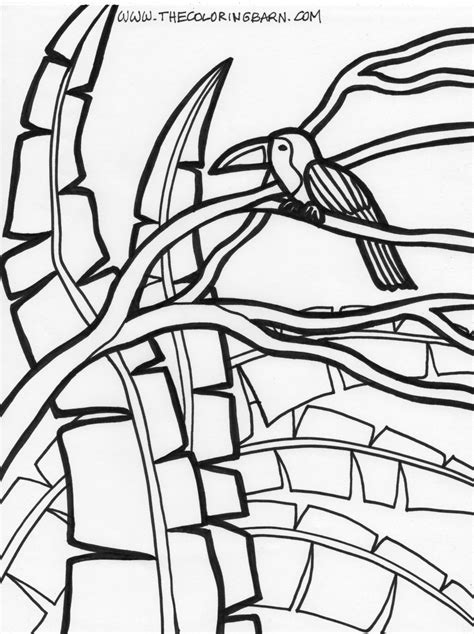 Easy Rainforest Coloring Pages by Easy Rainforest Coloring Tropical Coloring Coloring Pages