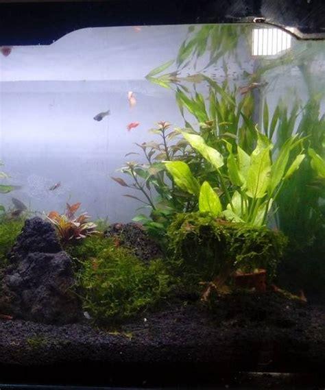 aquascape kecil jenis ikan kecil untuk aquascape binatang peliharaan