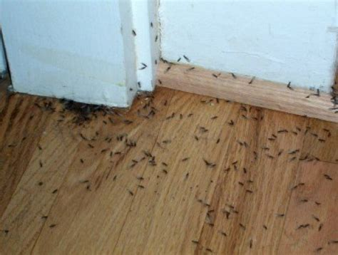 Carpenter Ants In Bathroom by So You Think You Have Termites How To Tell For Sure