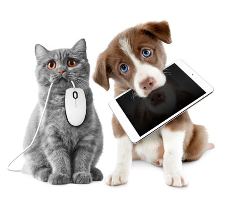 dogs and cats updating your or cat s details on the nsw companion