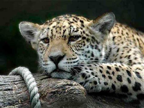 imagenes libres alta definicion conversaciones de caf 233 im 225 genes de animales en alta