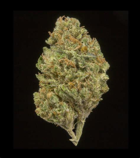 walker strain walker kush marijuana strain reviews allbud