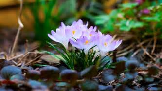 Flower Spring by 2014 Auntie Dogma S Garden Spot