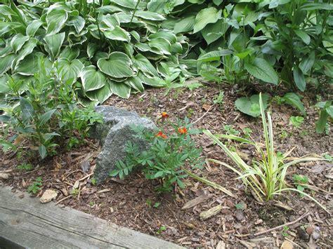 Landscaping Ideas For Mulch Garden Guides Bark Garden Ideas