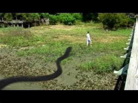 film ular vs buaya ular terbesar di dunia ular terbesar didunia terpanjang