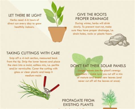 herb grower s cheat sheet infographic how to successfully grow an herb garden the