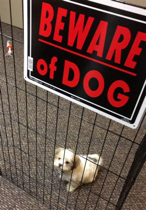 beware the dog house 10 dangerous dogs behind beware of dog signs bored panda