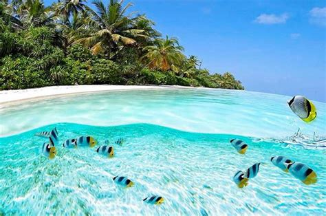 clearest ocean water in the world 10 of the clearest waters on earth