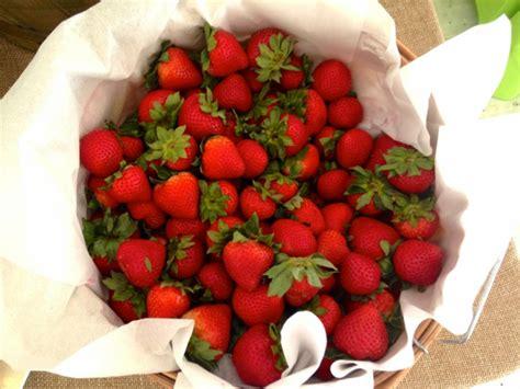 Lagerung Erdbeeren by Erdbeeren Lagern Tipps Und Tricks F 252 R L 228 Nger Frische
