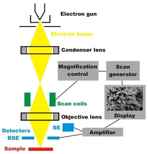 Which Electron Microscope Produces A 3d Image