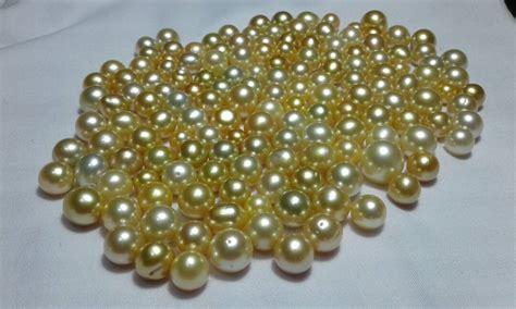 Kerang Mutiara Lombok ribuan kerang mutiara dilepas dilaut perairan lombok harga mutiara lombok perhiasan toko emas