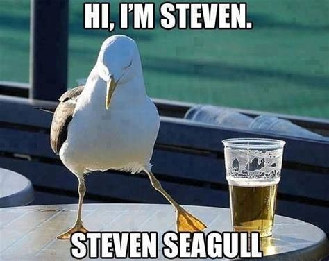 Hi Meme - 30 most funniest bird meme images and photos