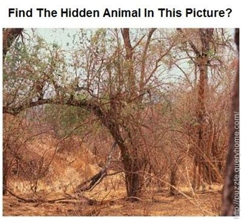 Find With A Picture Find The Animal In The Following Pictures