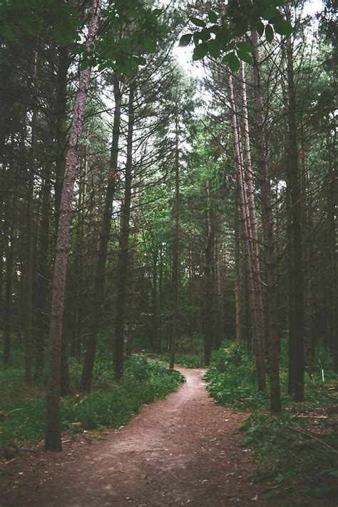wallpaper iphone forest forest tree path in woods trees the forest pinterest
