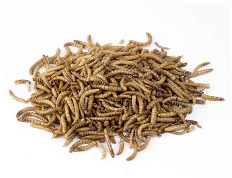 dried mealworms for birds buy online at vine house farm